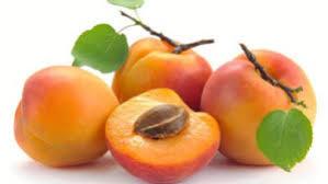 Овошни садници Кајсија